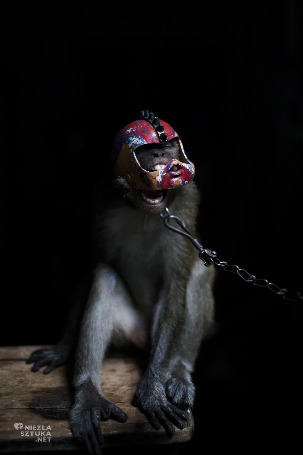 Artur Gutowski Indonezja małpi cyrk