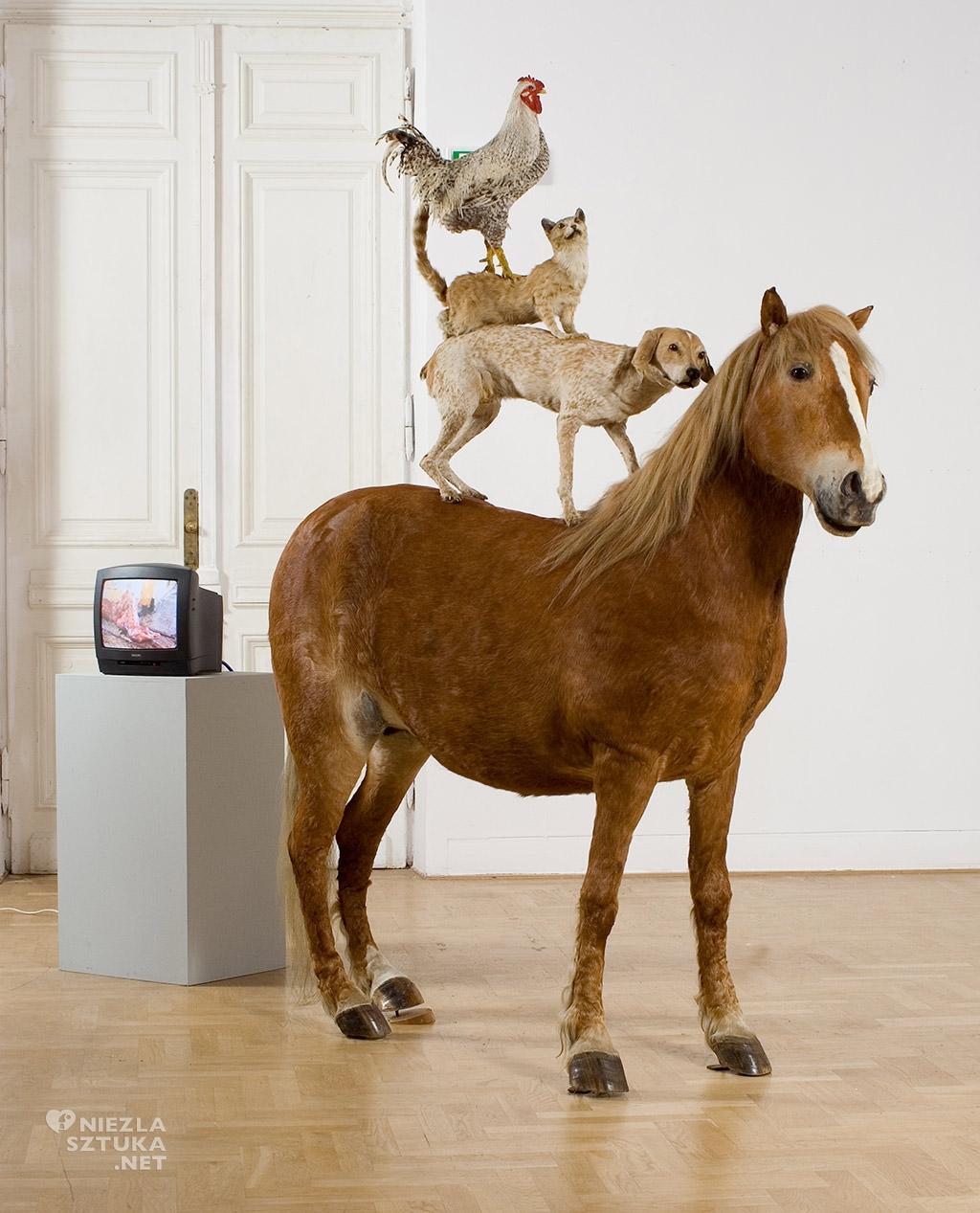 Katarzyna Kozyra, <em>Piramida zwierząt</em>, 1993, instalacja, kol. Zachęty Narodowej Galerii Sztuki, fot. Wikipedia