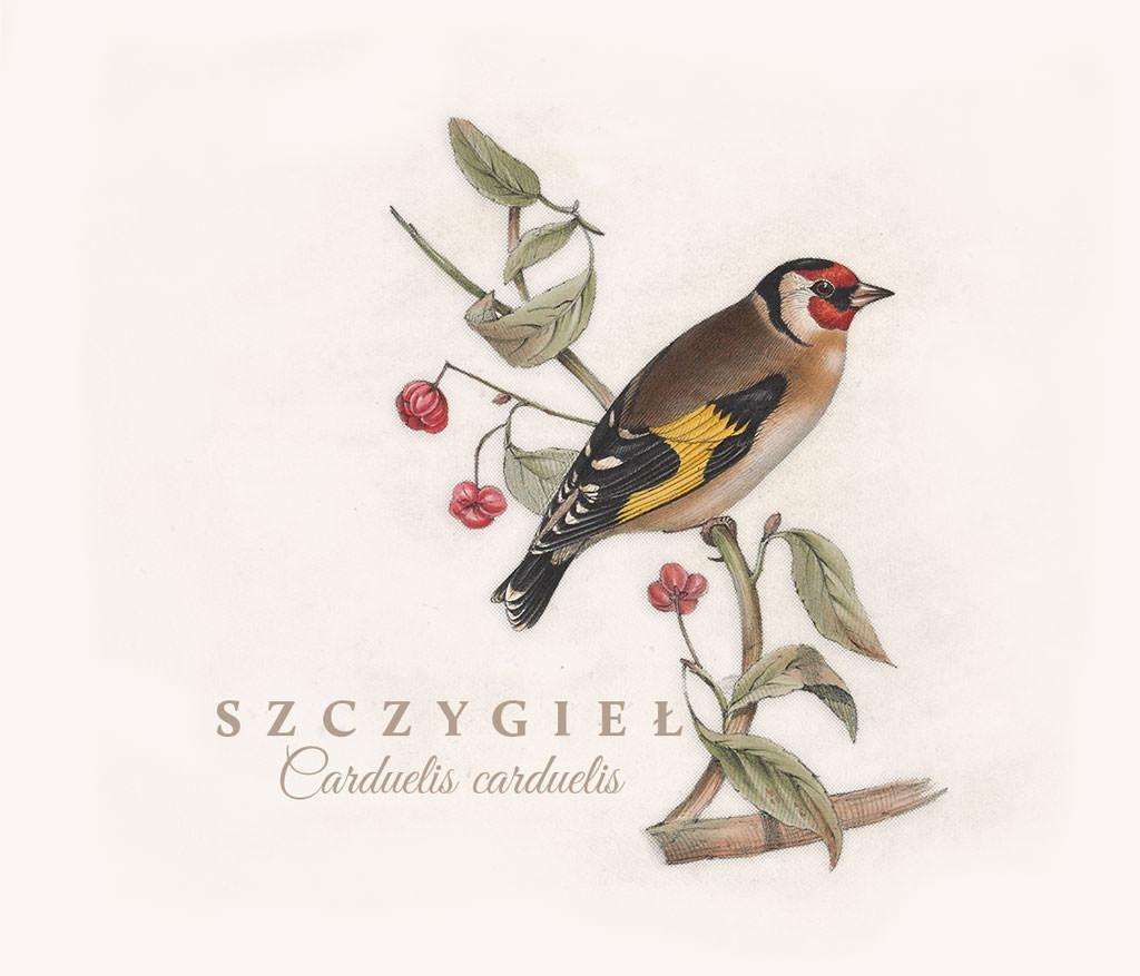 Ptak Szczygieł
