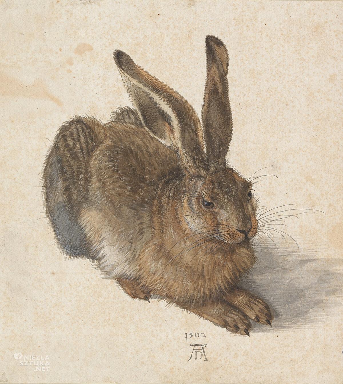 Albrecht Durer, Młody zając, Niezła sztuka