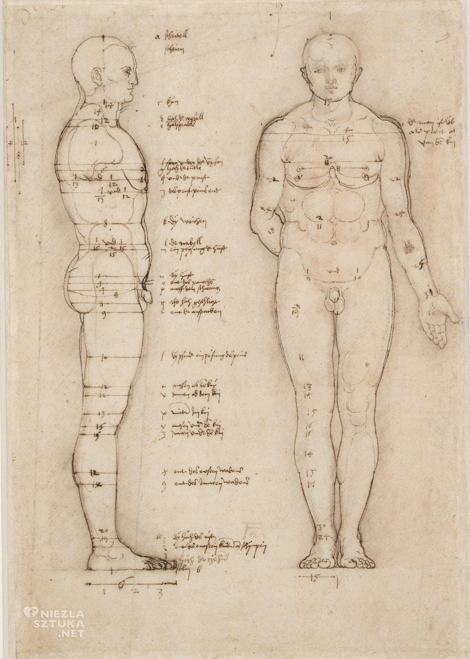 Albrecht Durer, Traktat o proporcjach ciała ludzkiego, Niezła sztuka