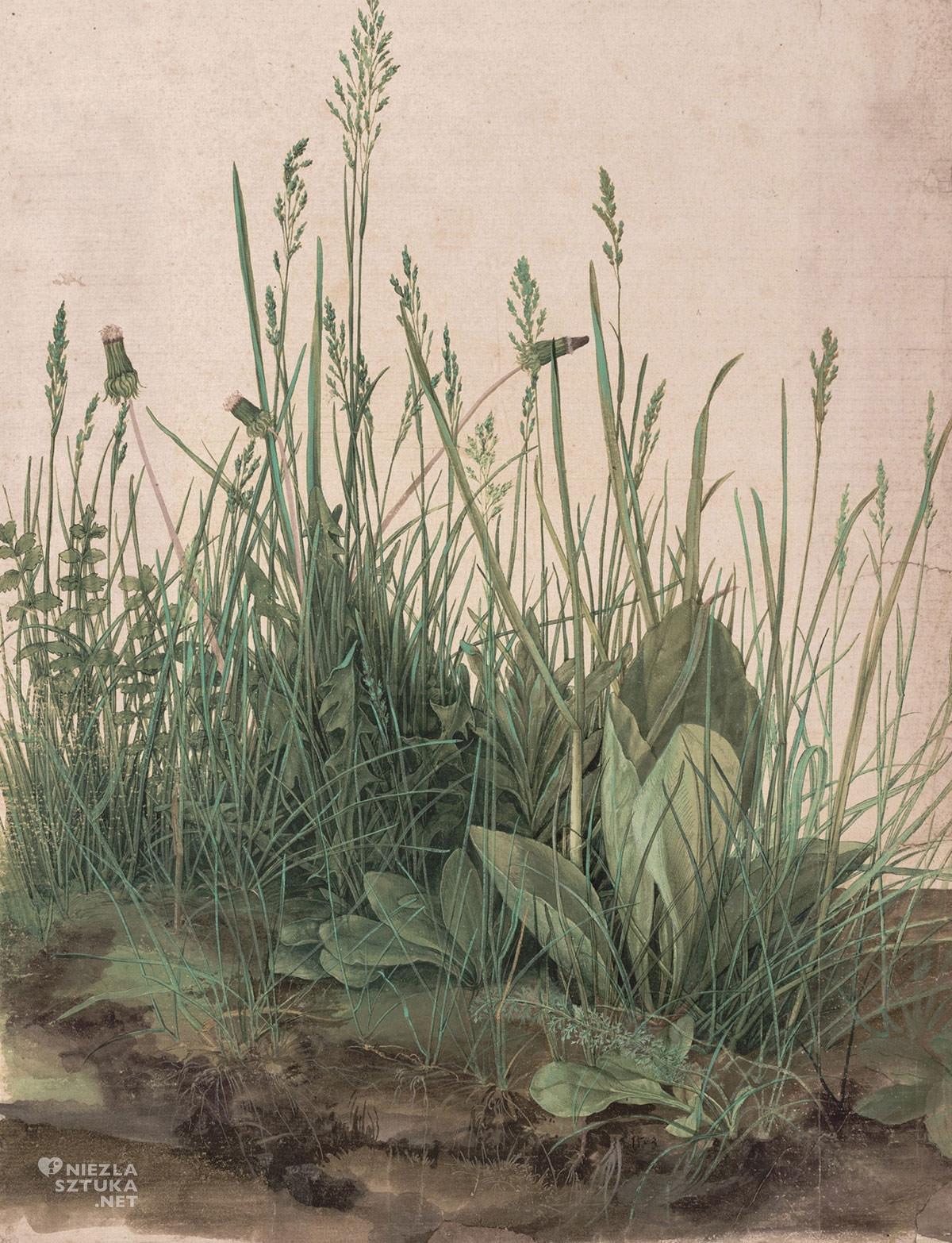 Albrecht Dürer, Studium trawy, Niezła sztuka