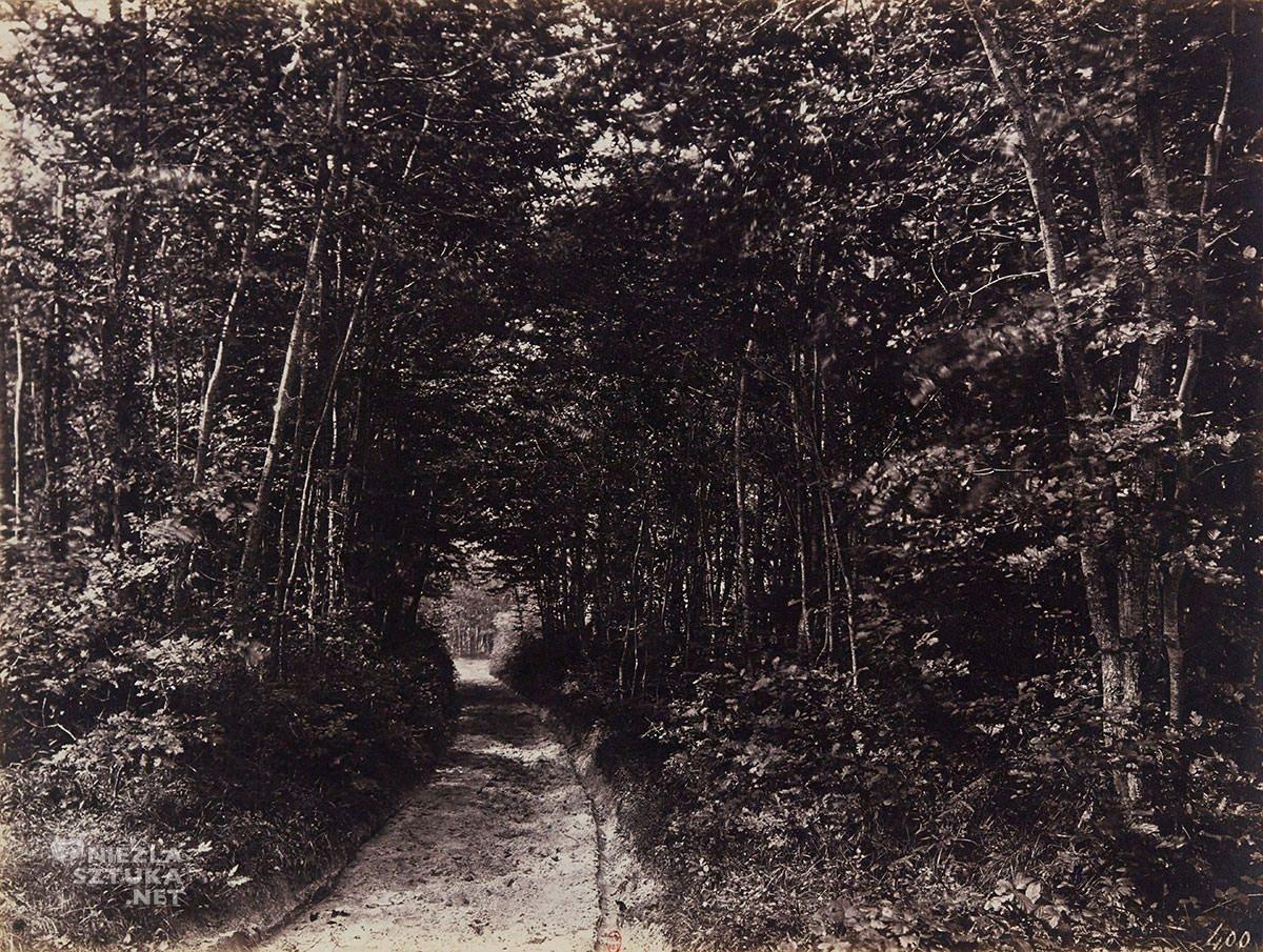 Eugène Cuvelier, fotografia, ścieżka w lesie, impresjonizm, Niezła Sztuka