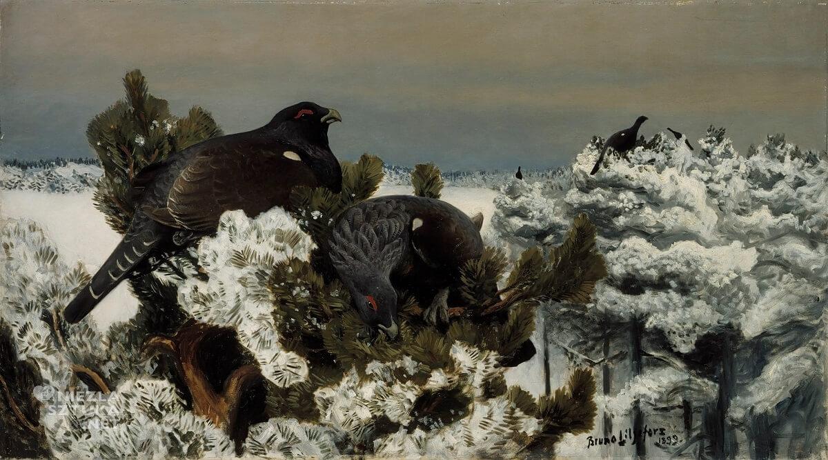 Bruno Liljefors, Głuszce w zimowym krajobrazie, sztuka skandynawska, Niezła sztuka