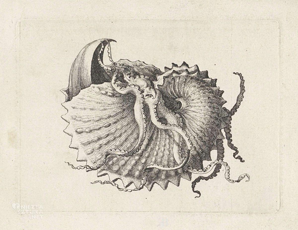 Vaclav Hollar, Muszla, ilustracja, Czechy, Niezła Sztuka