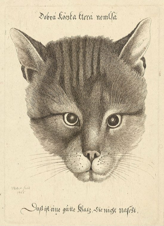 Vaclav Hollar, Kotka, ilustracja, zwierzęta, Czechy, Niezła Sztuka