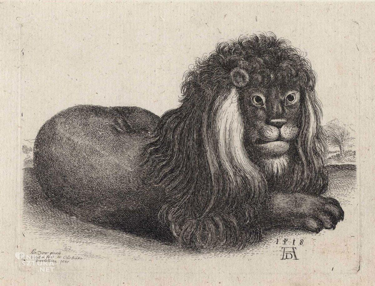 Vaclav Hollar, Odpoczywający lew, ilustracja, zwierzęta, Albrecht Dürer, Czechy, Niezła Sztuka