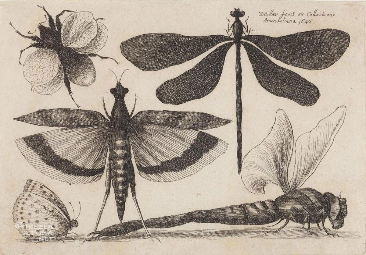 Vaclav Hollar, Ważki i trzmiel, owady, grafika, szkic, Niezła Sztuka