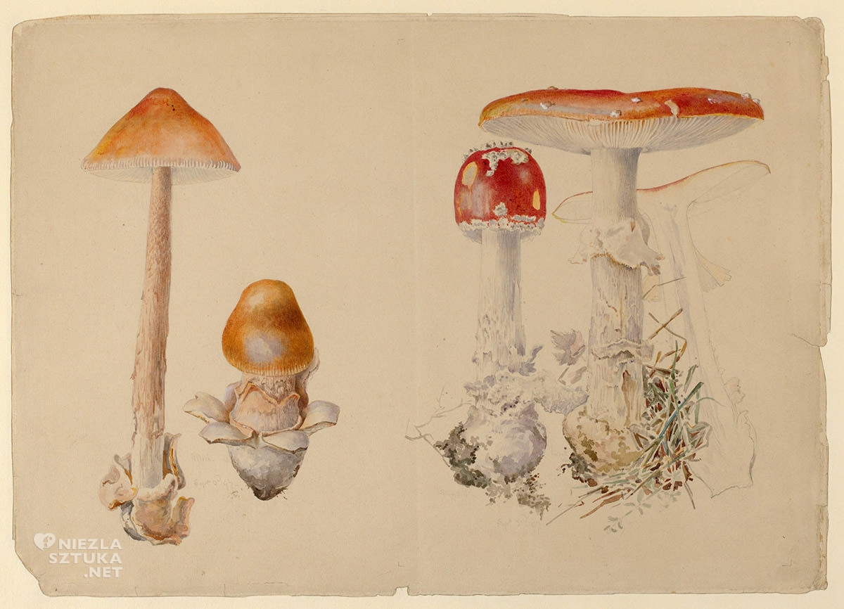 Beatrix Potter, Ilustracja, rysunek, natura, Anglia, kobiety w sztuce, Niezła Sztuka