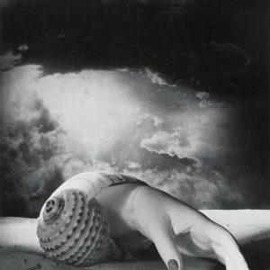Dora Maar, Bez tytułu, Ręka-muszla, sztuka współczesna, Niezła Sztuka