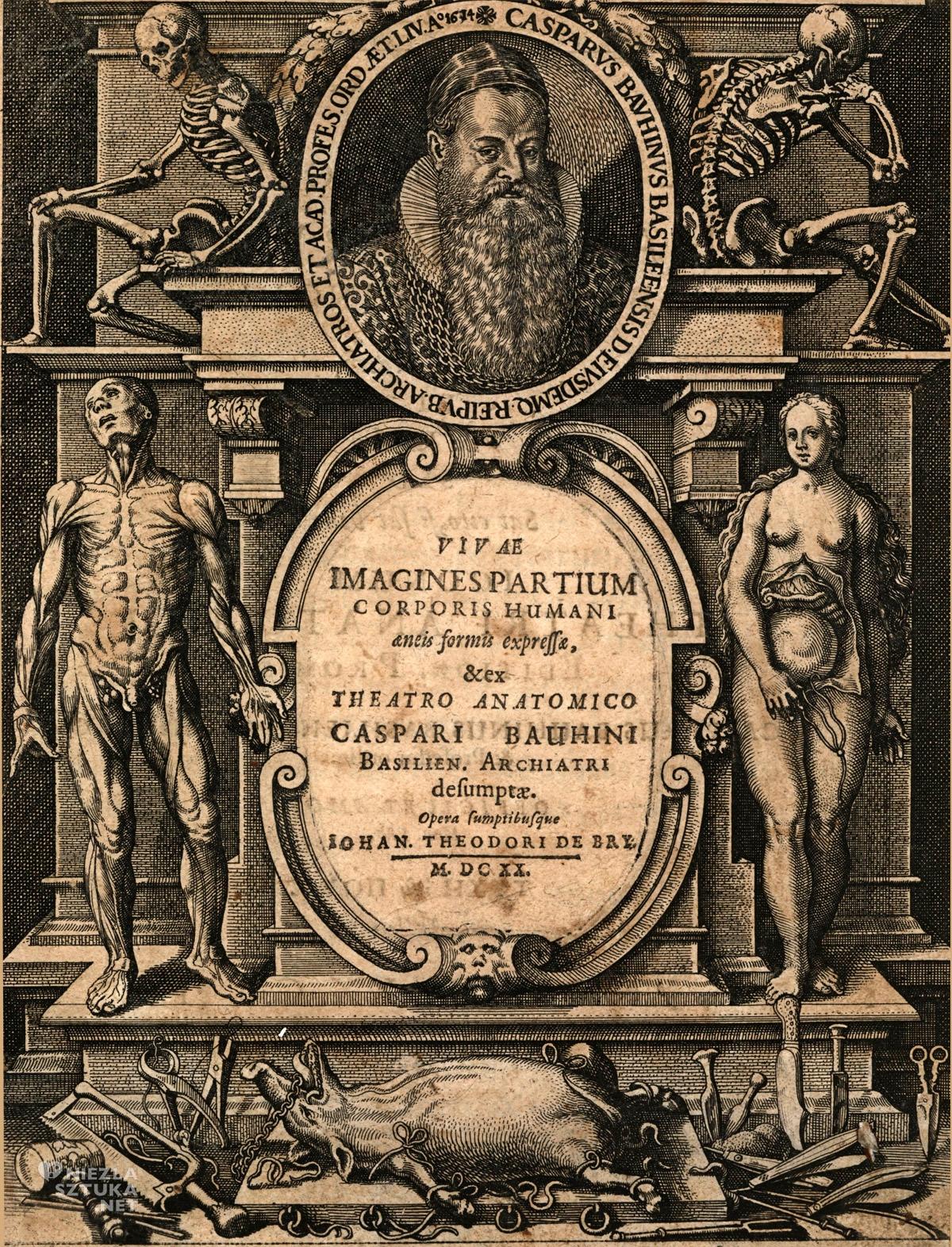 Caspar Bauhin, anatomia, sztuka niezła sztuka