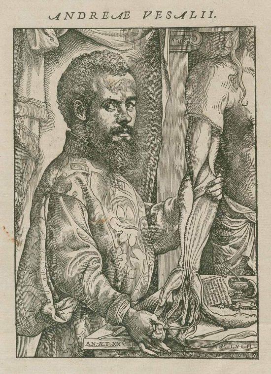Andreas Vesalius, Andreas Wesaliusz, flamandzki uczony, anatomia, niezła sztuka