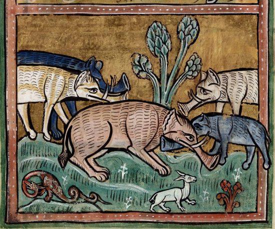 Bestiariusz w Rochester, słonie, zwierzęta, średniowiecze, Niezła Sztuka