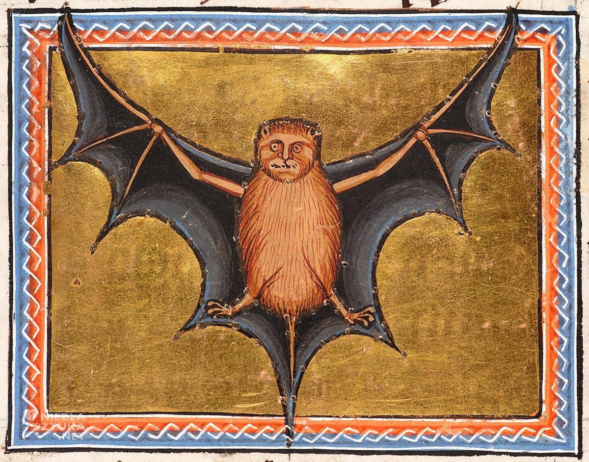 Nietoperz, Bestiariusz z Aberdeen, detal, średniowiecze, Niezła Sztuka