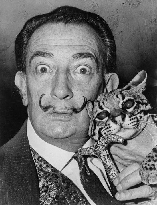 kot, ocelot, Babu, Salvador Dali, niezła sztuka