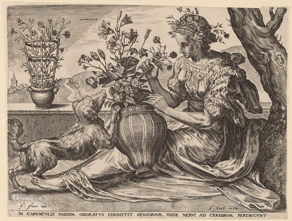 Cornelis Cort, Odoratus, zapach, węch, zmysły,Niezła Sztuka